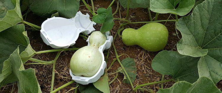 Vasos biodegradables