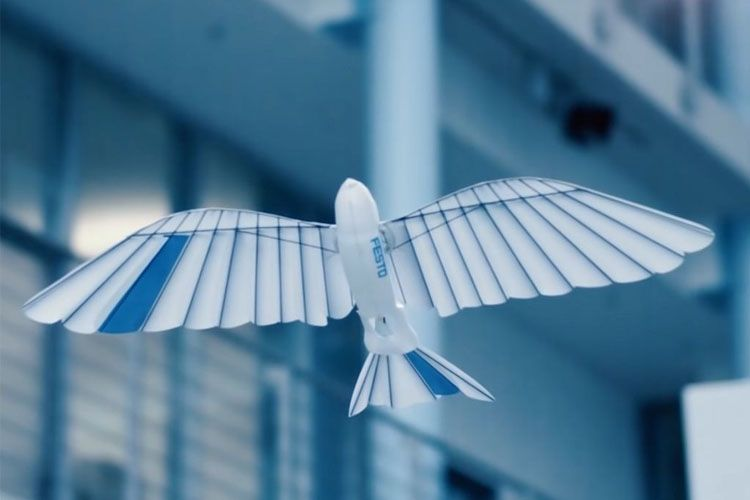Festo-BionicSwift-Bird-Robot_1-1