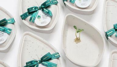 Semillas de regalo Packaging mejores diseños