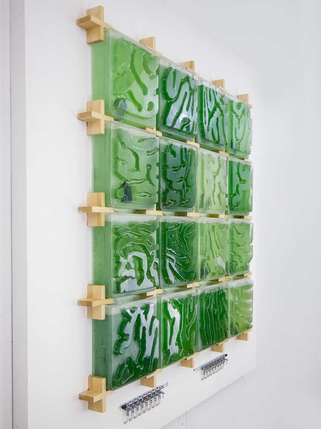 Granja de algas