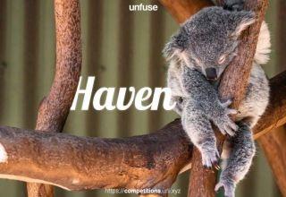 Concurso diseño Koalas